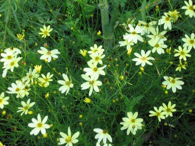 Flowers-2-