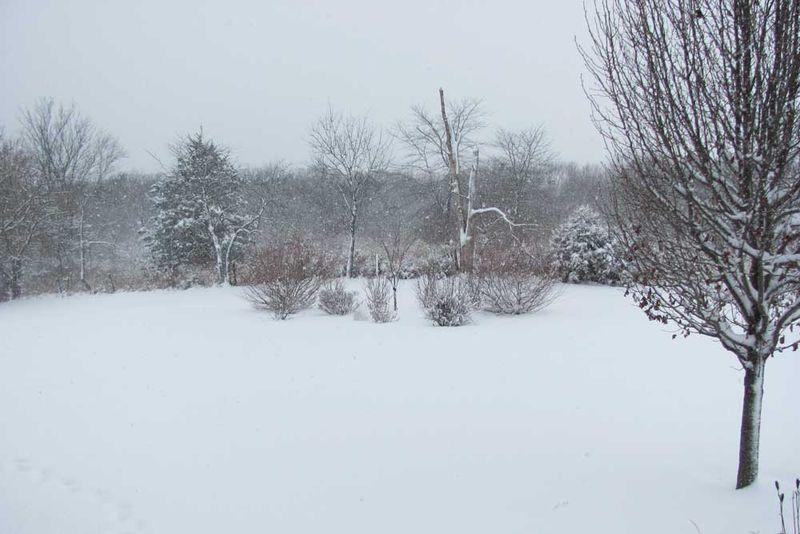 Snow-3-